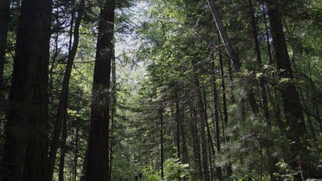vidéos et rushes de trail in the forest in siberia. - arbre à feuilles caduques