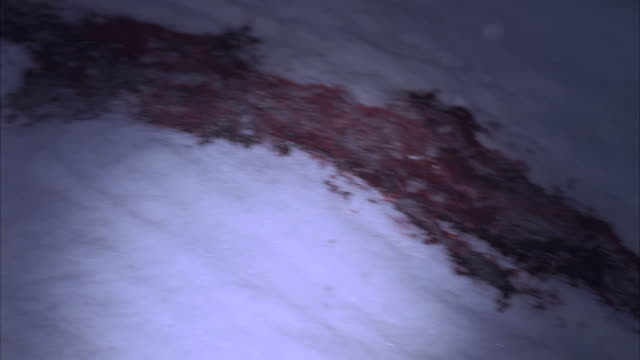 A trail of blood saturates a snow-packed street.