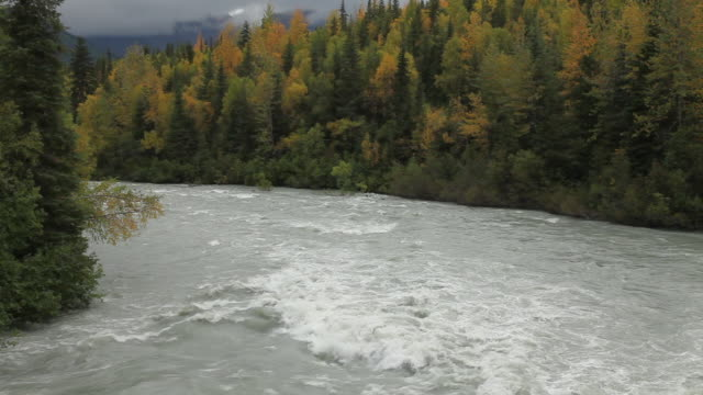 trail river, chugach national forest, alaska. - chugach national forest stock videos & royalty-free footage