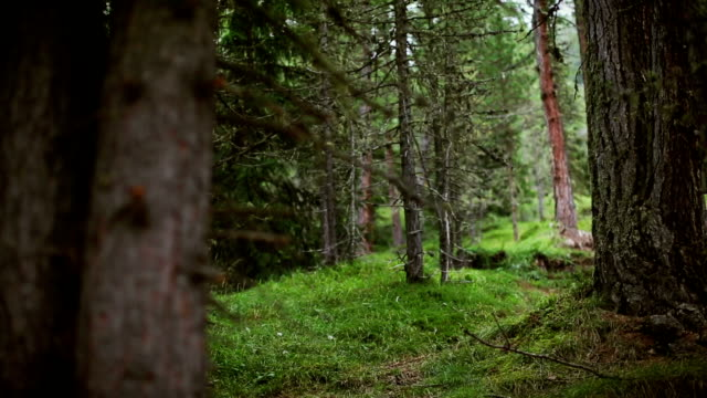 vidéos et rushes de la course sur sentier dans la forêt. - seulement des jeunes hommes