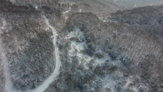 trail with trees in winter / jeongseon-gun, gangwon-do, south korea - deep snow stock videos & royalty-free footage