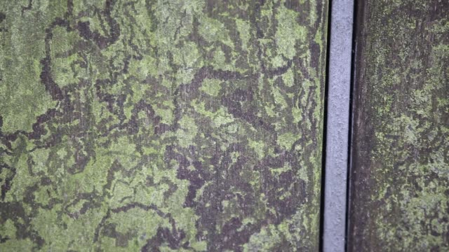 trails left by snails grazing on algae on a gate in oxford, uk. - mollusc stock videos & royalty-free footage