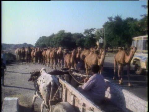 train of camels on the road / peshawar, pakistan - peshawar stock videos & royalty-free footage