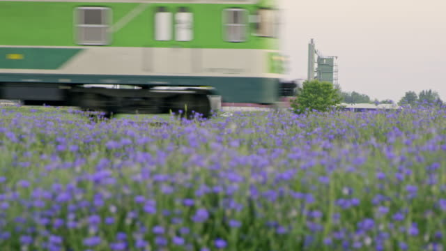 slo mo train passing a field of cornflowers - rail transportation stock videos & royalty-free footage