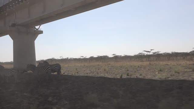 train viaduct going through nairobi national park, as part of the standard gauge railway going from nairobi to naivasha - animal themes stock videos & royalty-free footage