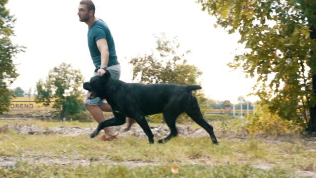 vídeos de stock, filmes e b-roll de cão adestrado - treinador