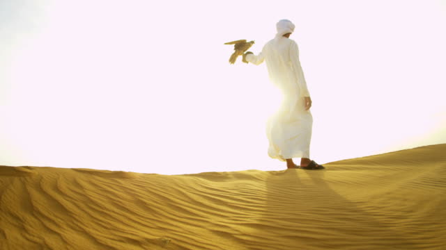 trained falcon balanced male falconers glove on desert - falcon bird stock videos & royalty-free footage