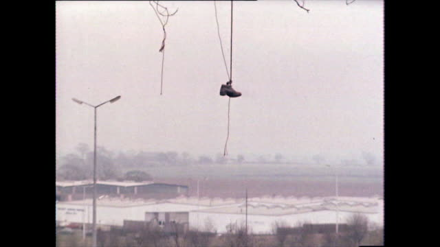 trainer hangs from bare tree with warehouses in background; 1980 - bare tree stock videos & royalty-free footage