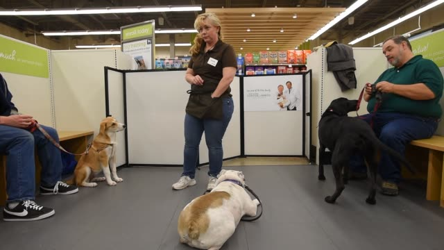 trainer helps dog owners tame their dogs inside a petco store in new jersey, u.s. on september 2, 2015. shots: a female employee trains dogs as their... - tame stock videos & royalty-free footage