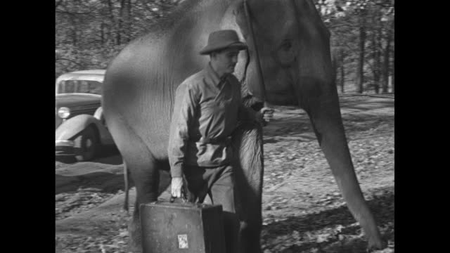ms trainer leads small elephant up path / cu trainer leads elephant off path up hill / ms trainer leads elephant over to four soldiers / trainer... - picnic table stock videos and b-roll footage