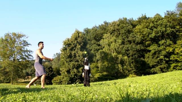 SLO-MO Trainer Unterricht Border-Collie, um einen Kugel