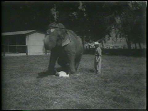 b/w 1954 trainer with elephant outdoors / man lying underneath elephant / newsreel - 1954 stock videos & royalty-free footage