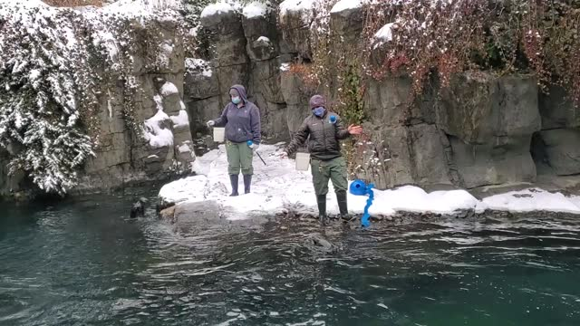 trainers work with a harbor seals during a snow fall at central park zoo on february 18, 2021 in new york city. - セントラルパーク動物園点の映像素材/bロール