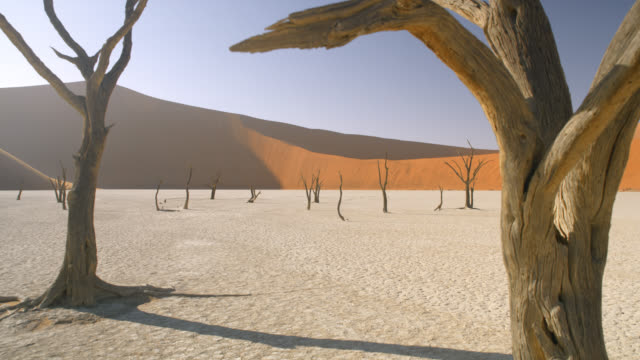 ws tranquil deadvlei trees in sunny white clay pan against sand dune,namibia,africa - bare tree stock videos & royalty-free footage