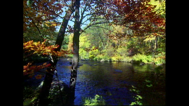 tranquil gvs of streams and autumn leaves in vermont - vermont stock-videos und b-roll-filmmaterial