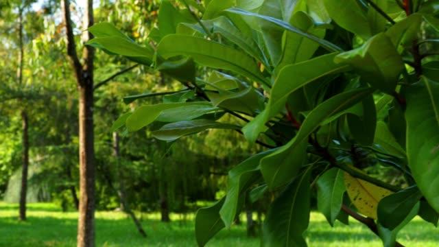 vídeos y material grabado en eventos de stock de parque tranquilo en el distrito de resort - pinaceae