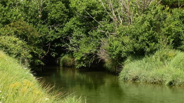 静かな川の流れるような木々の下で - 潅木点の映像素材/bロール