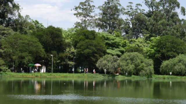 tranquil scene in the park, summer time - natural parkland stock videos & royalty-free footage