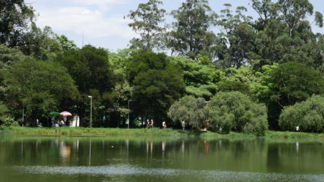ruhige landschaft im park, sommerzeit - geschützte naturlandschaft stock-videos und b-roll-filmmaterial