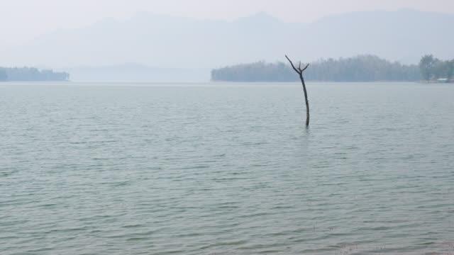 tranquil scene lake med stubbe - tropiskt träd bildbanksvideor och videomaterial från bakom kulisserna