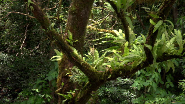 tranquil scene of tree ferns on tree branch - dicksonia antarctica stock videos & royalty-free footage