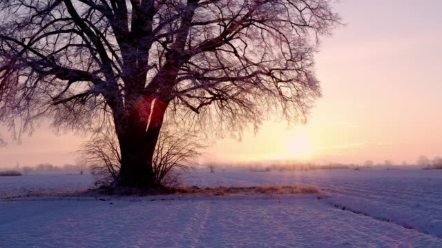 ms tranquil sunrise behind single tree in idyllic,snow covered field,slovenia - single tree stock videos & royalty-free footage