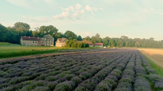 ms tranquil, idylliska lavendelfält och bondgård byggnader i landsbygdens landskap, prekmurje, slovenien - softfokus bildbanksvideor och videomaterial från bakom kulisserna
