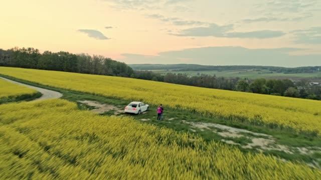 ws tranquil,idyllic rural yellow canola crop,prekmurje,slovenia - prekmurje stock videos & royalty-free footage