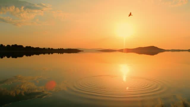 vidéos et rushes de ws tranquille, vue idyllique oiseau volant au-dessus de l'océan placide au coucher du soleil, croatie - éthéré