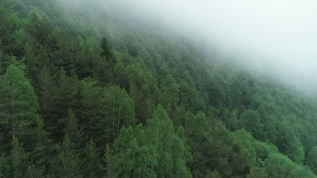 tranquilizing forest surrounded with a fog, making an idyllic feeling - pinaceae stock videos & royalty-free footage