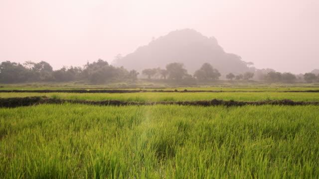 vídeos de stock e filmes b-roll de ms tranquil,rural green landscape,sri lanka - sri lanka