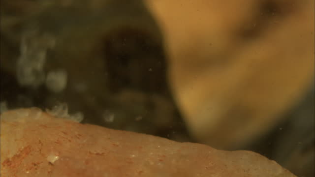 translucent eggs slowly float to the sandy floor of freshwater basins. - translucent stock videos & royalty-free footage