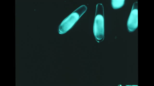 translucent fish eggs growing vs stages of egg development