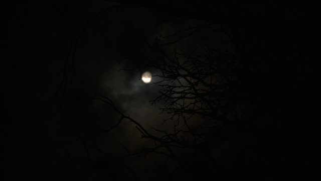 Translucent white clouds and silhouetted tree branches obscure a full moon. Available in HD.