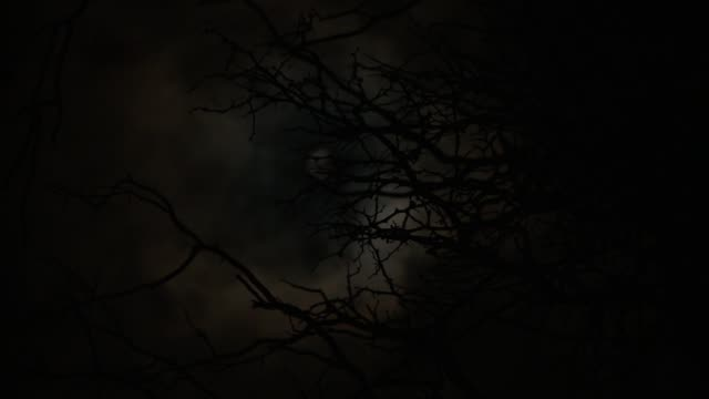 Translucent white clouds drift in front of a full moon behind silhouetted tree branches. Available in HD.