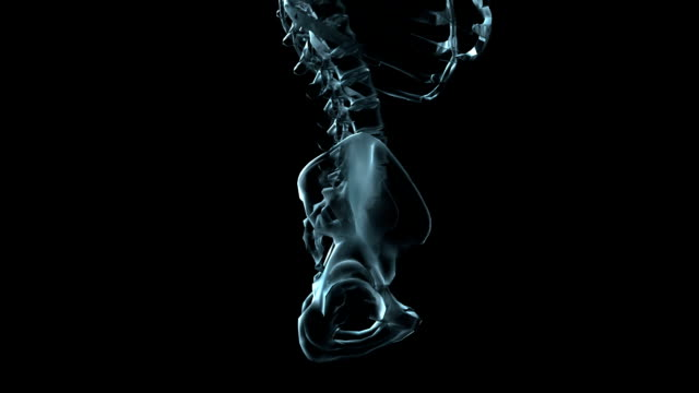 A transparent blue rotating X-ray pelvis on a black screen.
