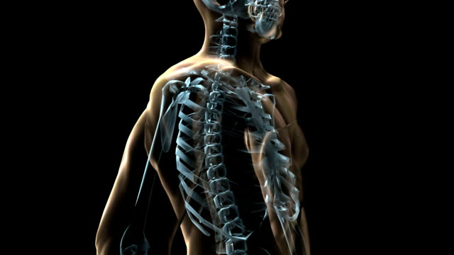A transparent blue rotating X-ray skeleton and body on a black screen.