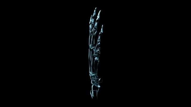a transparent blue rotating x-ray skeleton human hand on a black screen. - biomedical illustration stock videos & royalty-free footage