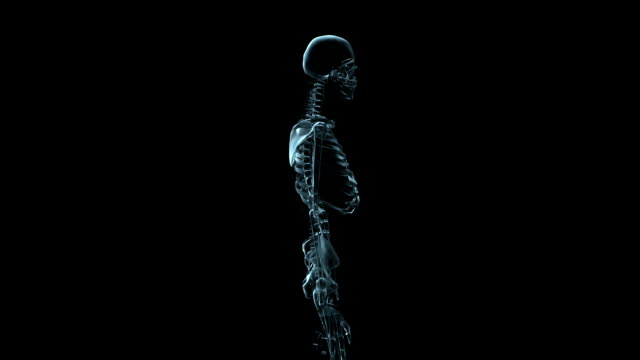 a transparent blue rotating x-ray skeleton on a black screen. - biomedical illustration stock videos & royalty-free footage