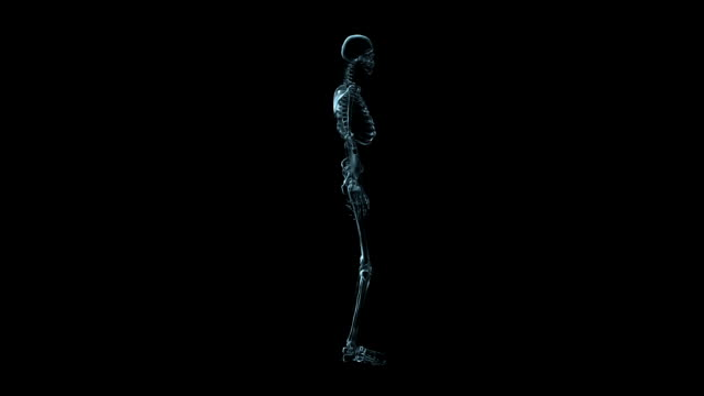 A transparent blue rotating X-ray skeleton on a black screen.