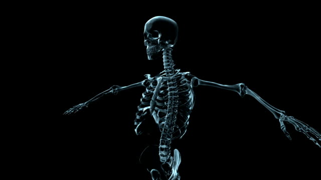 A transparent blue rotating X-ray skeleton torso and arms on a black screen.