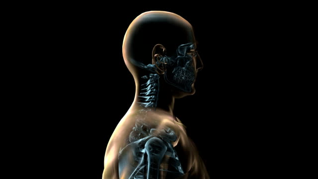 a transparent blue rotating x-ray skeleton torso and body on a black screen. - biomedical illustration stock videos & royalty-free footage