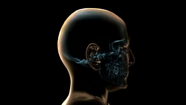 A transparent blue rotating X-ray skull and head on a black screen.