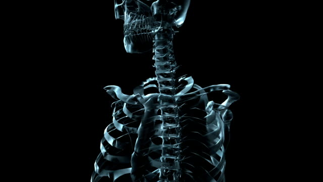 a transparent blue rotating x-ray skull and pelvis on a black screen. - biomedical illustration stock videos & royalty-free footage