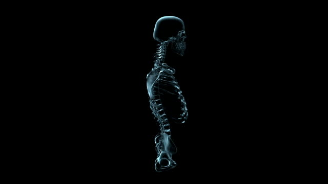 a transparent blue rotating x-ray skull and torso on a black screen. - biomedical illustration stock videos & royalty-free footage