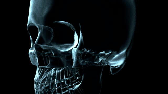 A transparent blue rotating X-ray skull on a black screen.