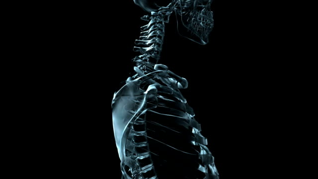A transparent blue rotating X-ray vertebrae on a black screen.