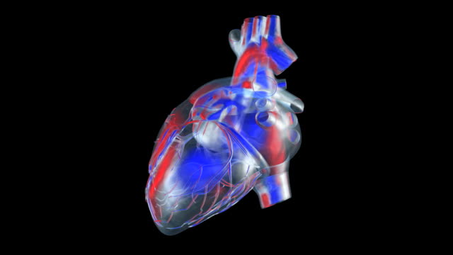 transparent heart - anatomy stock videos & royalty-free footage