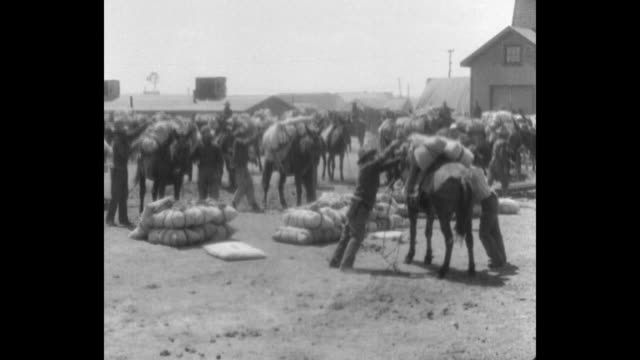 ws transport crew members load bags of supplies onto mules as they depart gibson ranch camp and proceed to general john pershing's base in mexico /... - maultier stock-videos und b-roll-filmmaterial