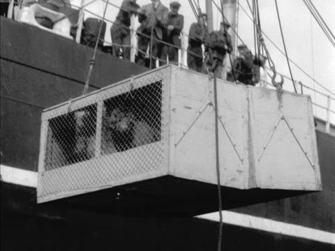 transporter cage containing huskies is lowered from the ss gallic to the royal albert dock in london. - london docklands stock videos & royalty-free footage